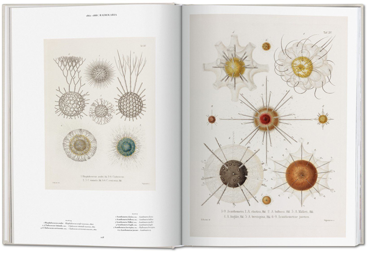 Ernst_Haeckel_001