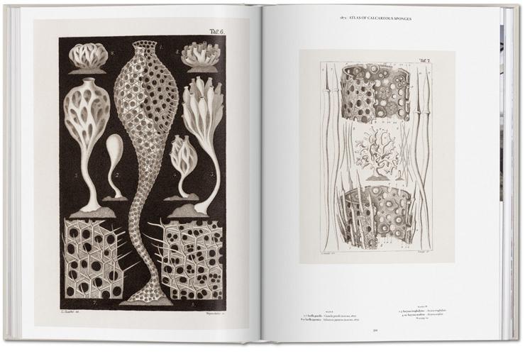 Ernst_Haeckel_003