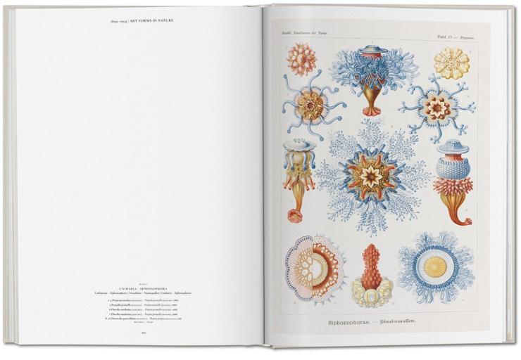 Ernst_Haeckel_004
