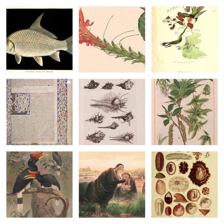 biodiversitylibrary_01