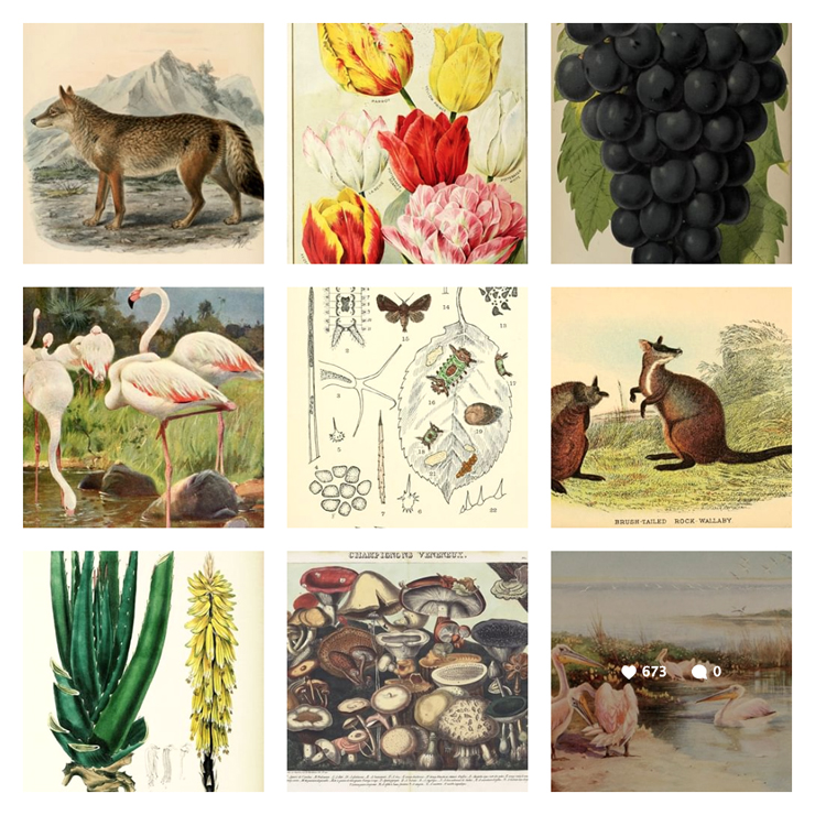 biodiversitylibrary_02